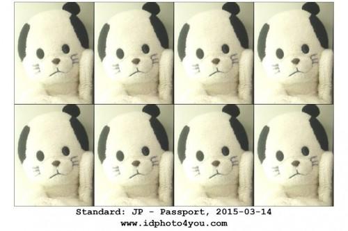 DIY Passport Photo