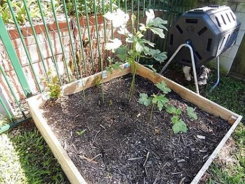 Veggie Garden Apr1