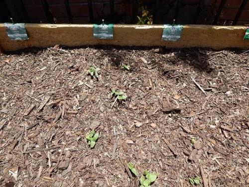 Veggie Garden Dec