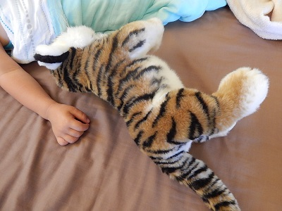 Twin Baby Tigers at Dreamworld18