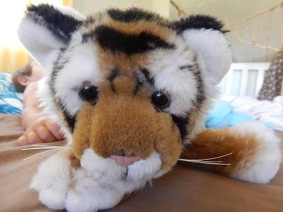 Twin Baby Tigers at Dreamworld19
