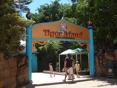 Twin Baby Tigers at Dreamworld2