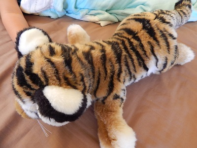 Twin Baby Tigers at Dreamworld20