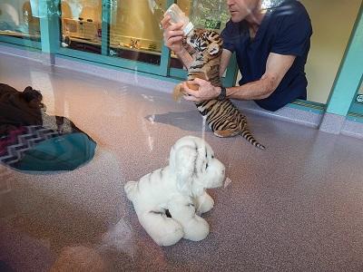 Tiger Cub at Dreamworld1