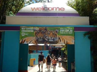 Tiger Cub at Dreamworld4