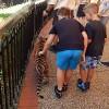 触ったぞ!オーストラリアドリームワールドのかわいい虎の子供画像集