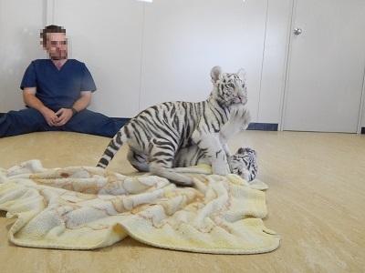 White Tiger Cubs18