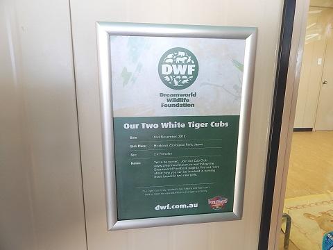White Tiger Cubs2