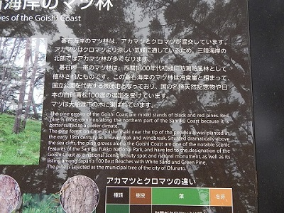 iwate-ofunato-goishi-kaigan27